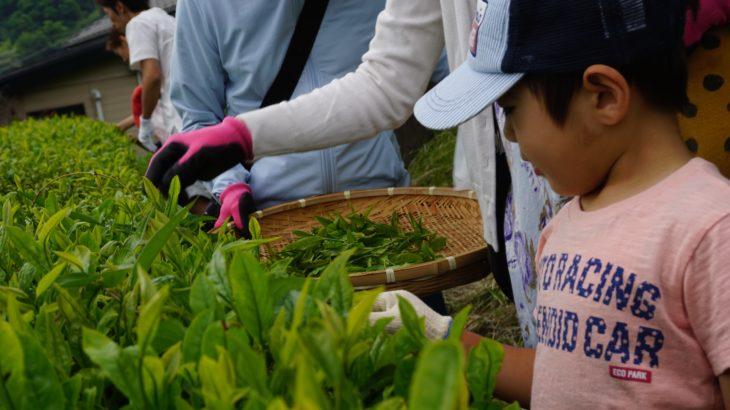 地域の財産を受け継ぎ守るのがノビトワークスの役目【お茶摘み&釜炒り体験】